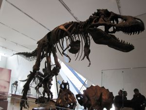 Dinosaur at the Royal Ontario Museum