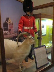 The 22nd Regiment, based at the Quebec Citadelle, has a goat as its mascot.  The goat's ancestors were given to Queen Elizabeth II by the Shah of Persia. Fancy goats.